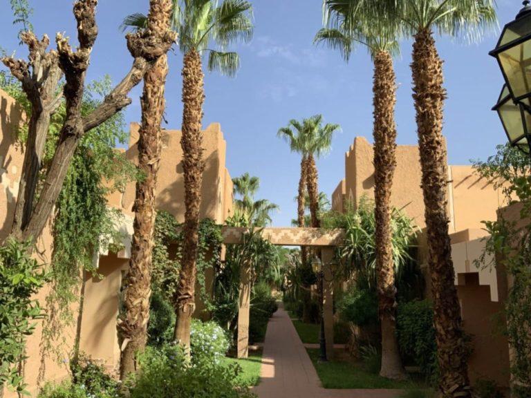 Hotel Palm Trees